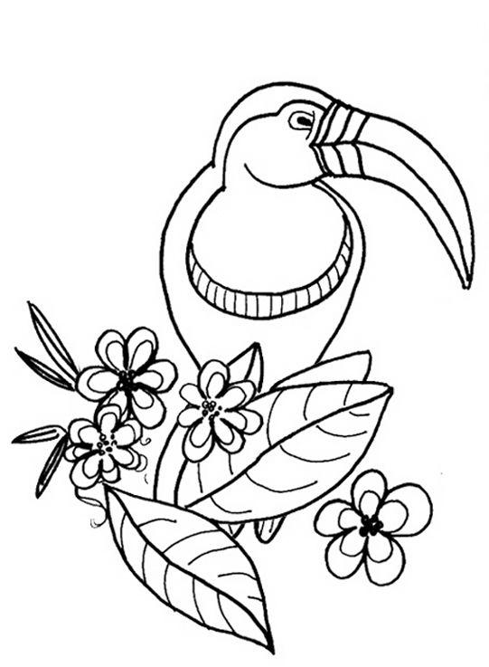 Coloriage de toucan - Coloriage toucan a imprimer ...